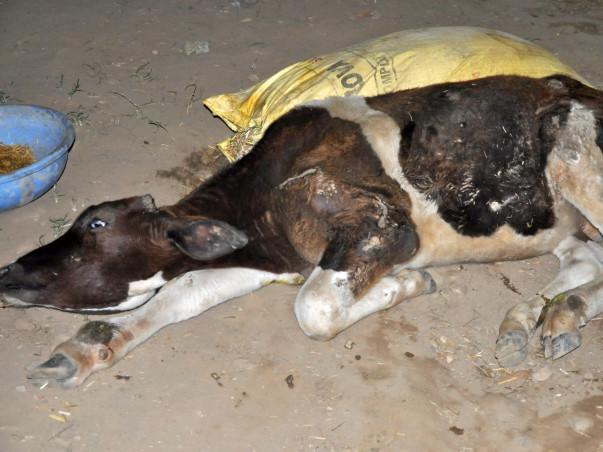 Animals At Doon Animal Welfare Needs Your Help