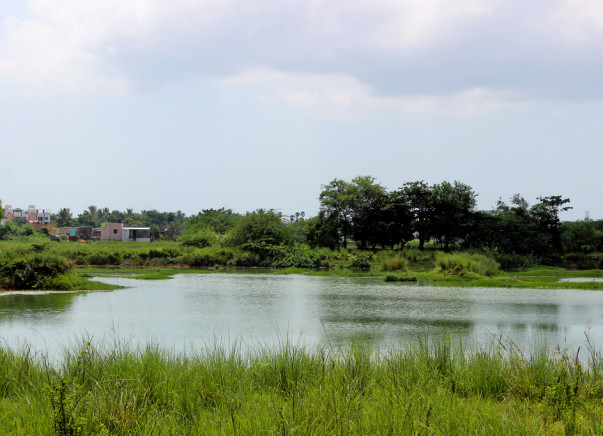 Help us raise funds to restore the Perumbakkam lake in Chennai and revive the lost biodiversity of the lake
