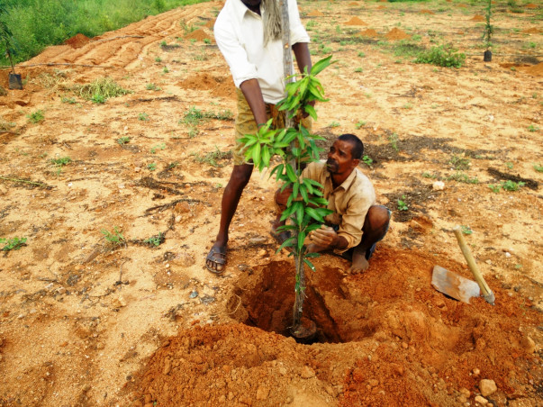 I am fundraising to help farmers with sustainable income through tree plantation