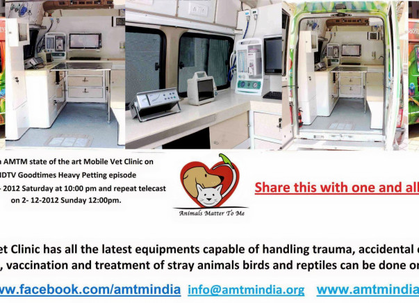 Spay neuter Program for strays species