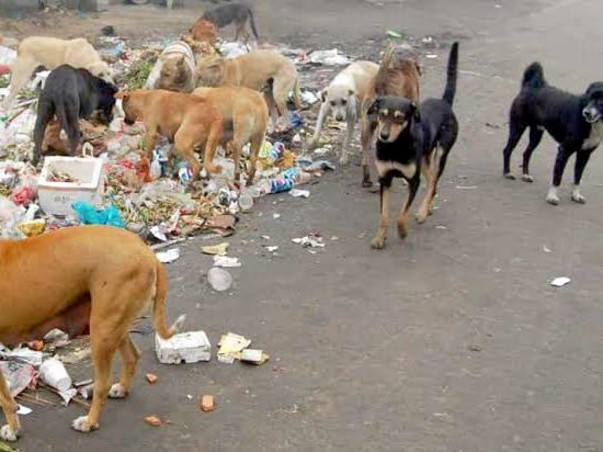 Help To Save Street Dogs