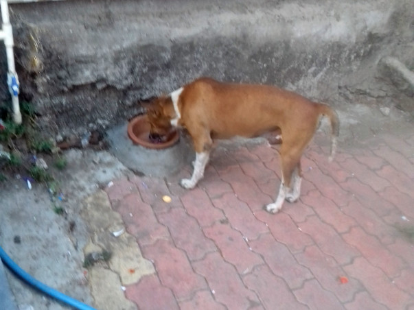 Help for street dogs and cats