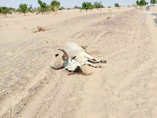 Help to save dying cows