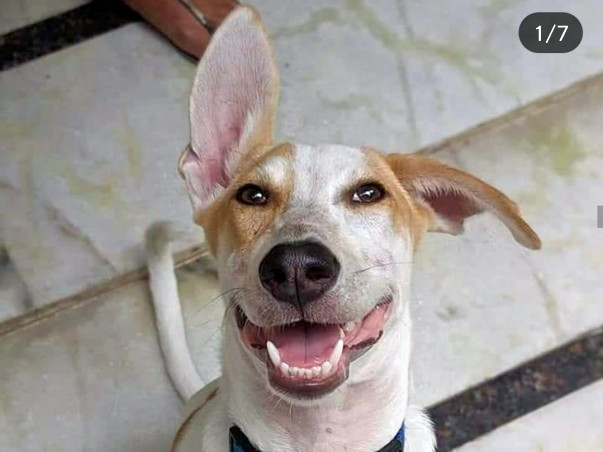 HELP HIM FLY THE ROAD TO HIS FOREVER HOME IN NEW JERSEY!
