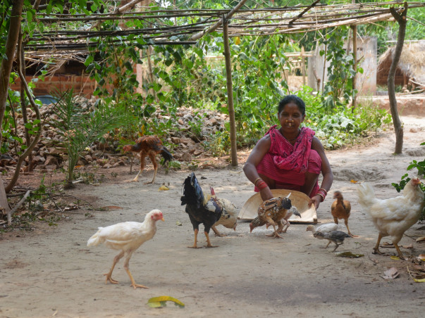 Support 1000 Tribal Women To Raise Poultry for Income & Nutrition